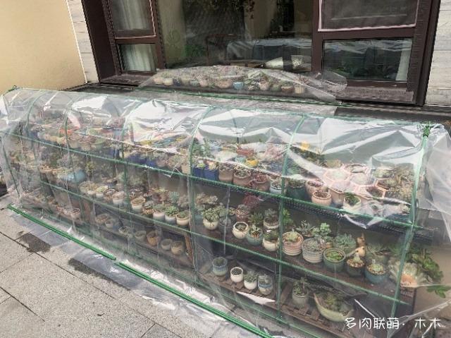 上海,冬天的多肉