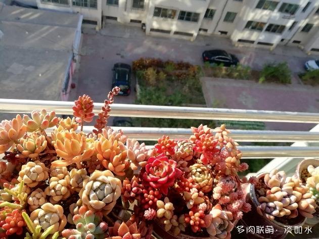 辽宁阳台党,阳台上的多肉