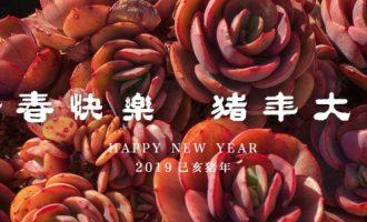 新春快乐,猪年大吉
