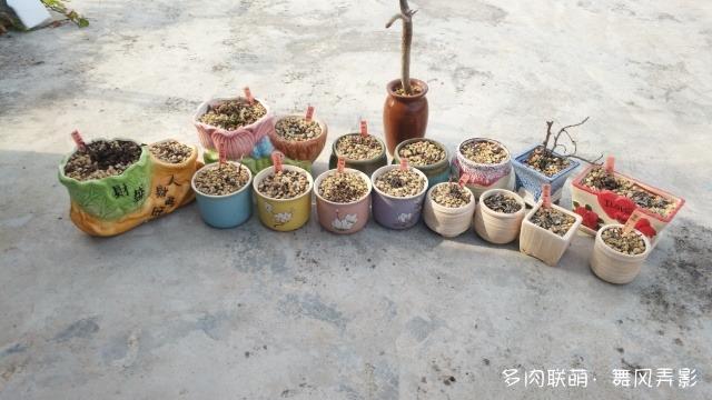 广东惠州冬天的多肉