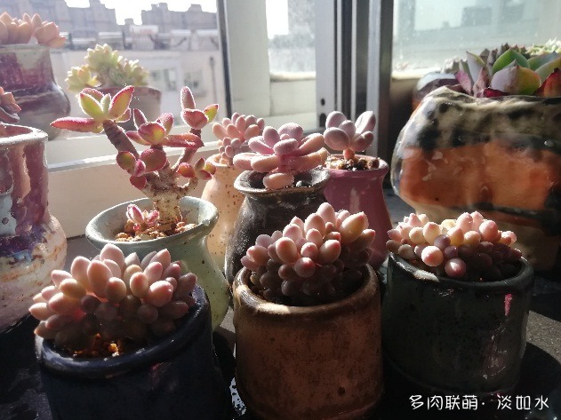 春天,东北阳台上的多肉
