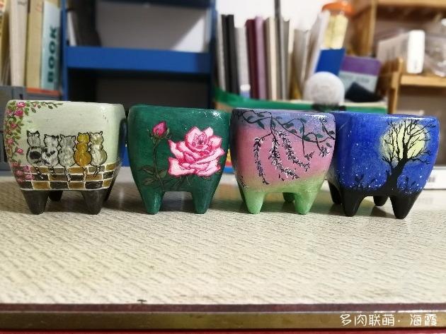 浙江省杭州市大临安养护的多肉