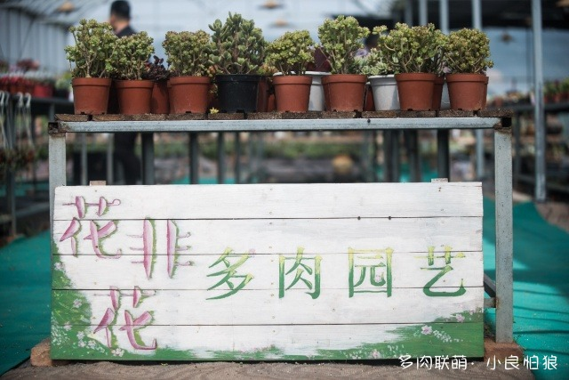 浙江江山多肉植物大棚