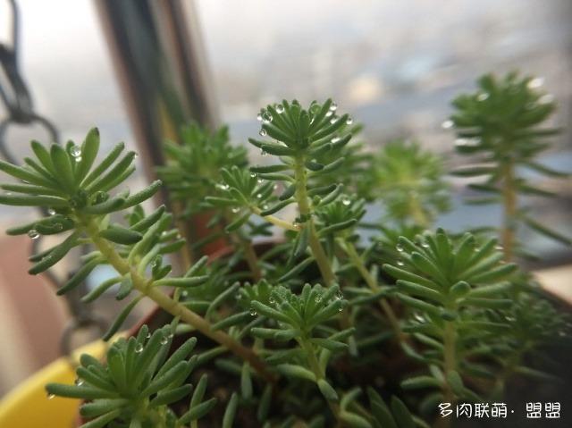 广西柳州连绵阴雨的多肉