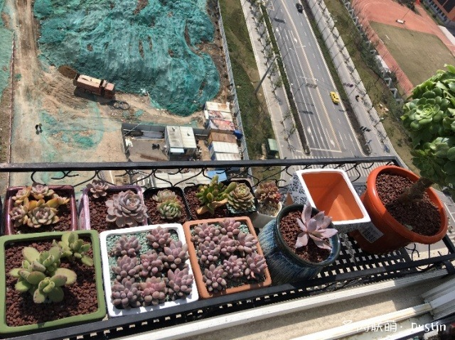 南京阳台上的多肉
