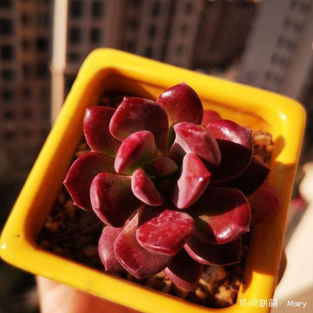 河南郑州春天渐渐变美的多肉