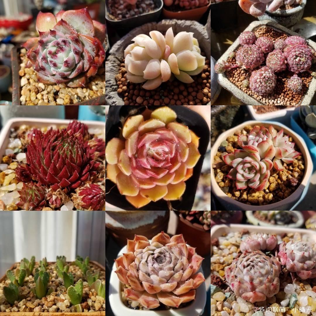 青岛,春天的多肉