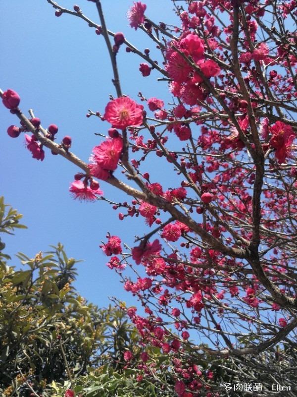 春天的青岛
