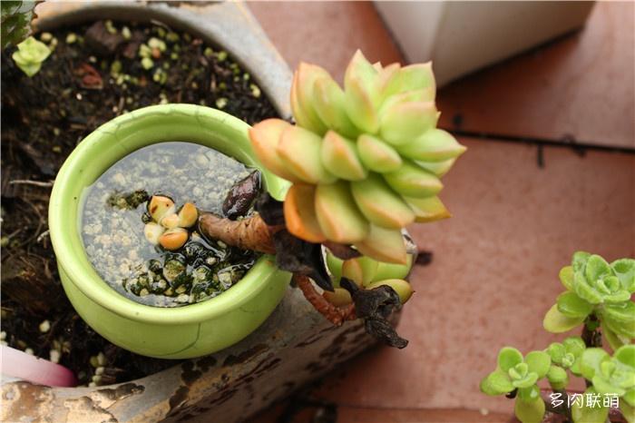 积水的花盆