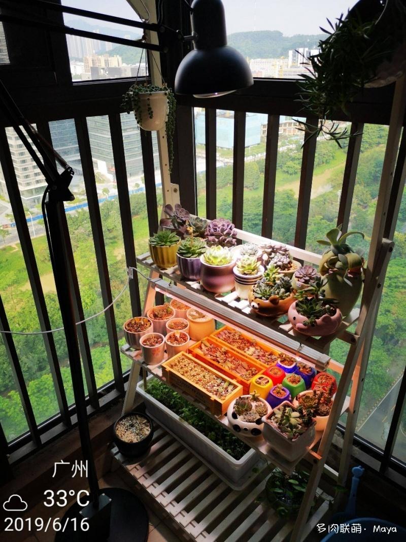 广州高层阳台养的多肉
