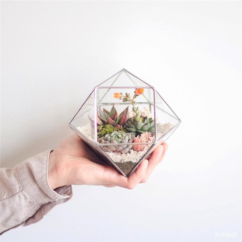 多肉玻璃花房