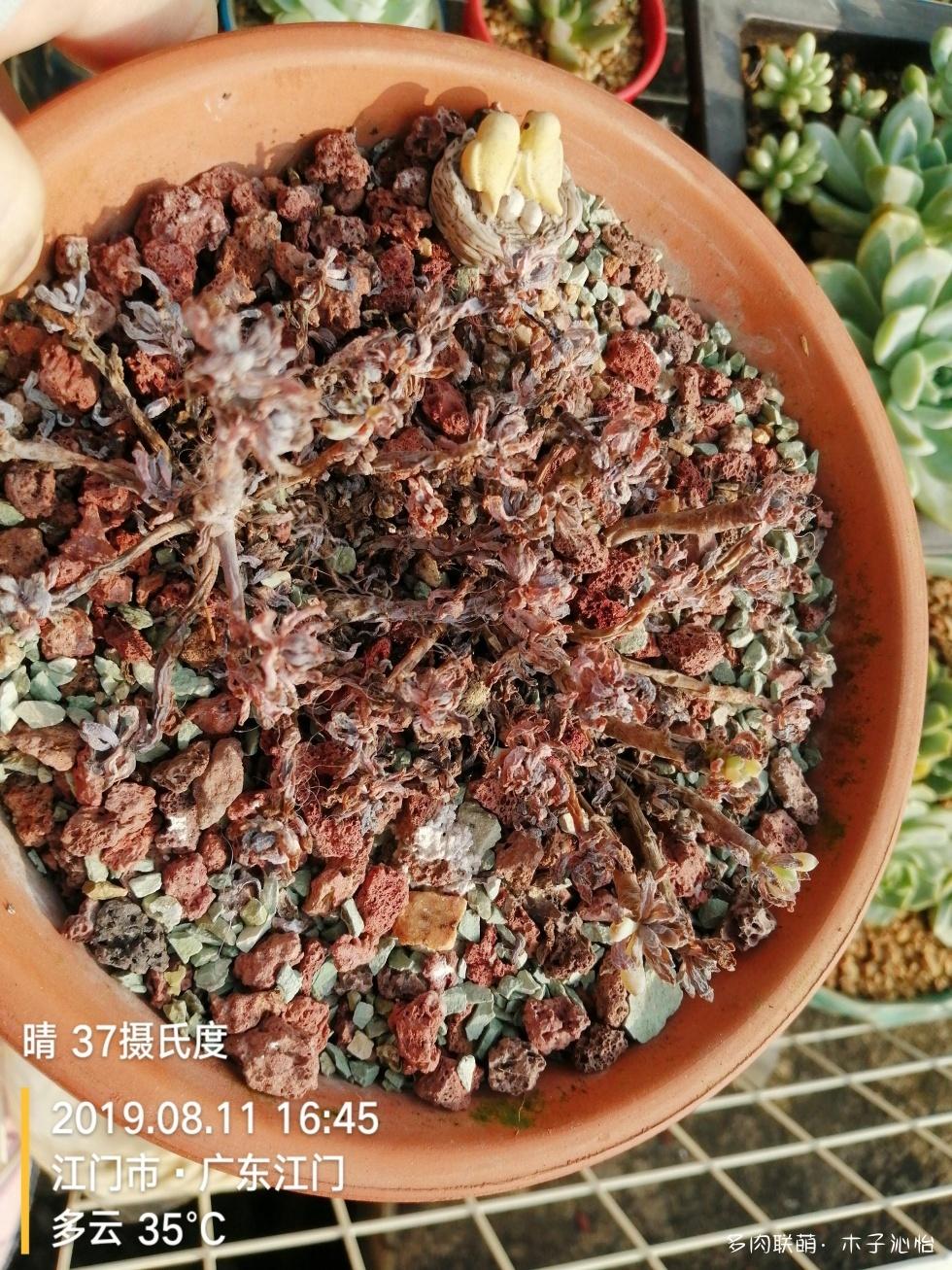 广东春天和夏天的多肉对比照