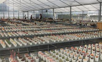 周末赏肉,日本静冈县的多肉大棚