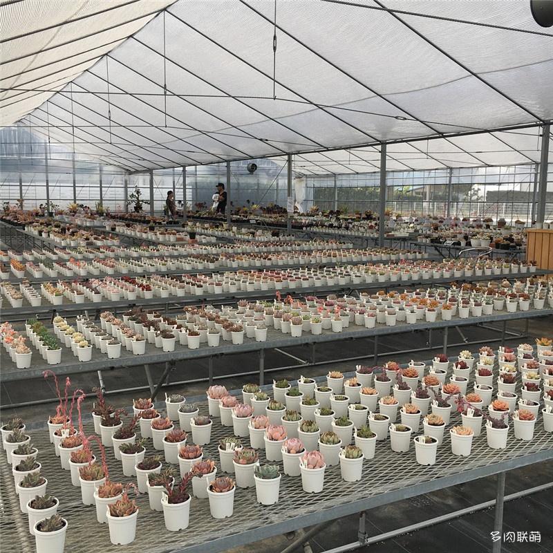 日本静冈县的多肉大棚