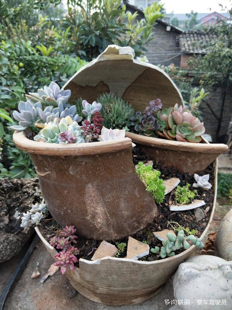 水泥、石头、木头、砖头做成的花盆