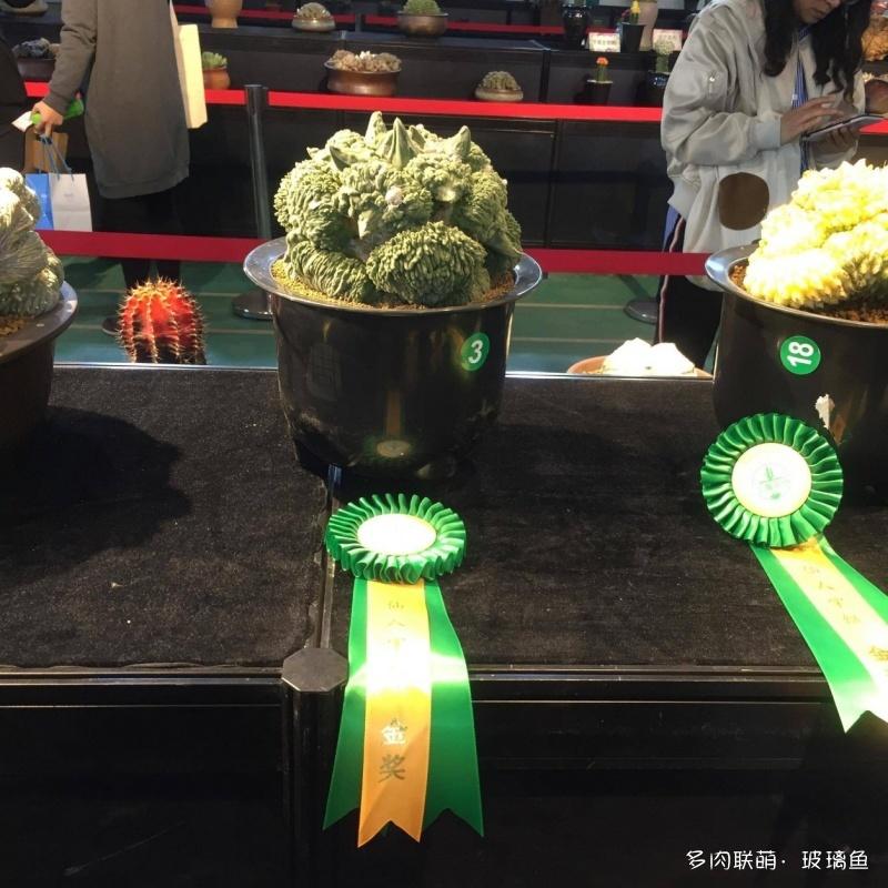 2019上海多肉展,展出的多肉