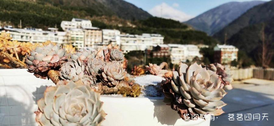 杭州,山上的美丽多肉