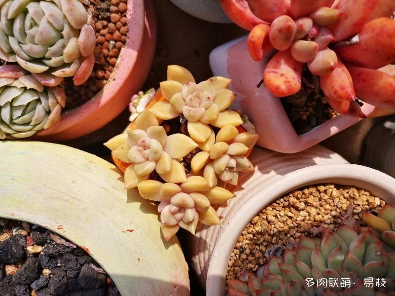 浙江舟山,冬天的多肉