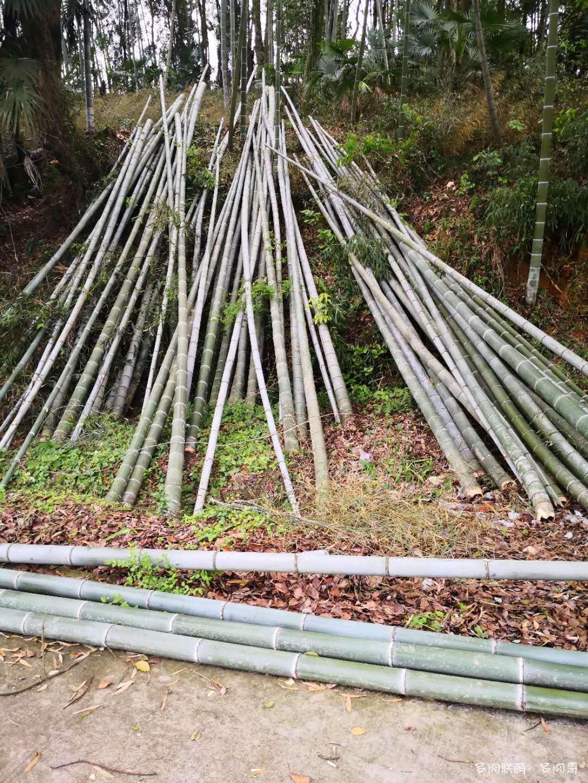 竹子制多肉花盆