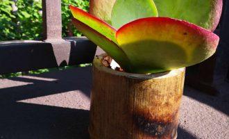 用竹子为多肉造一个家——竹制花盆