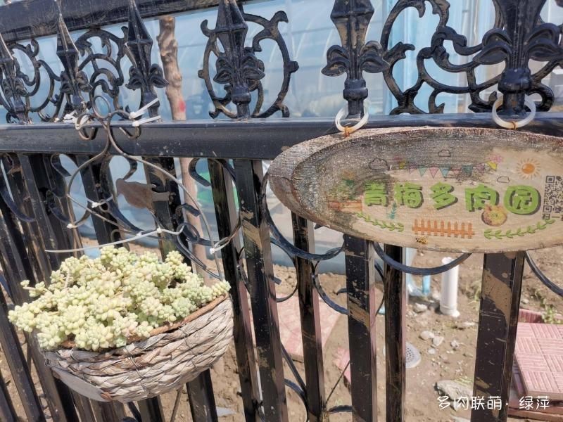 山东青梅多肉植物大棚