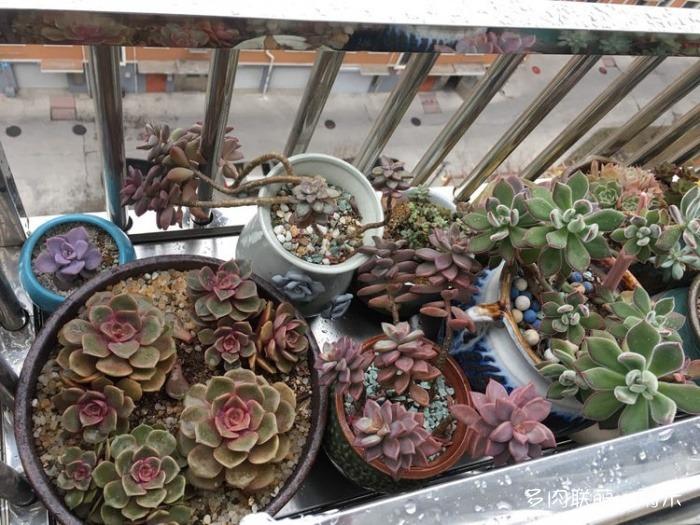 山东威海春天窗台上多肉的变化