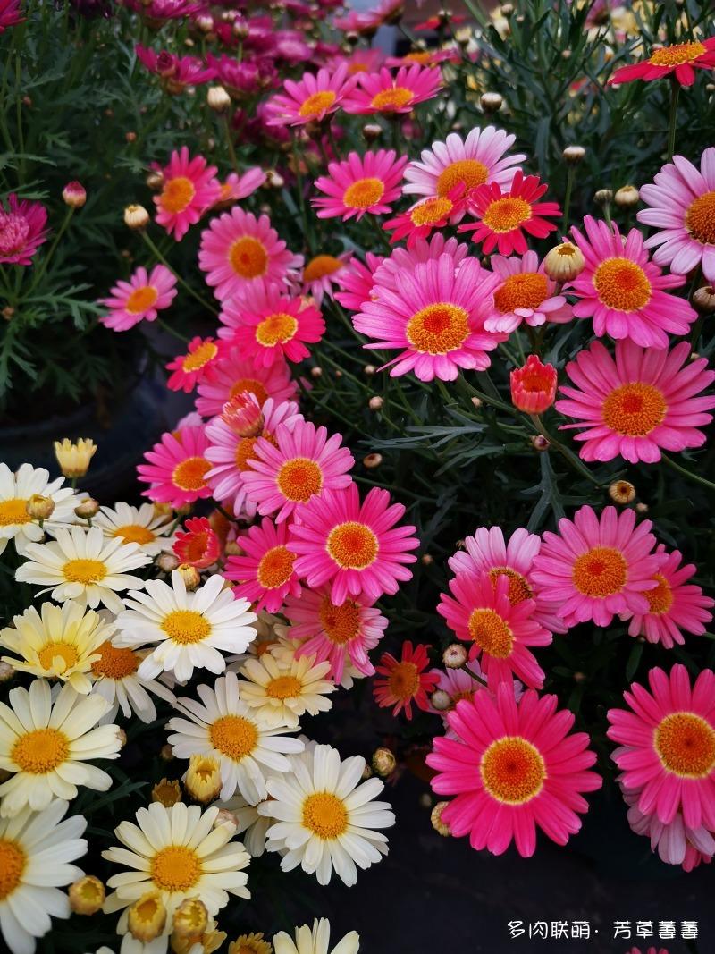 深圳夏天开花的各种草花