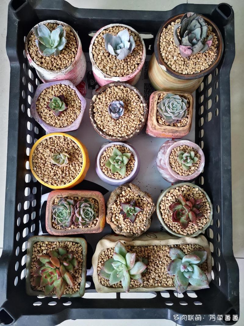 深圳夏天的多肉