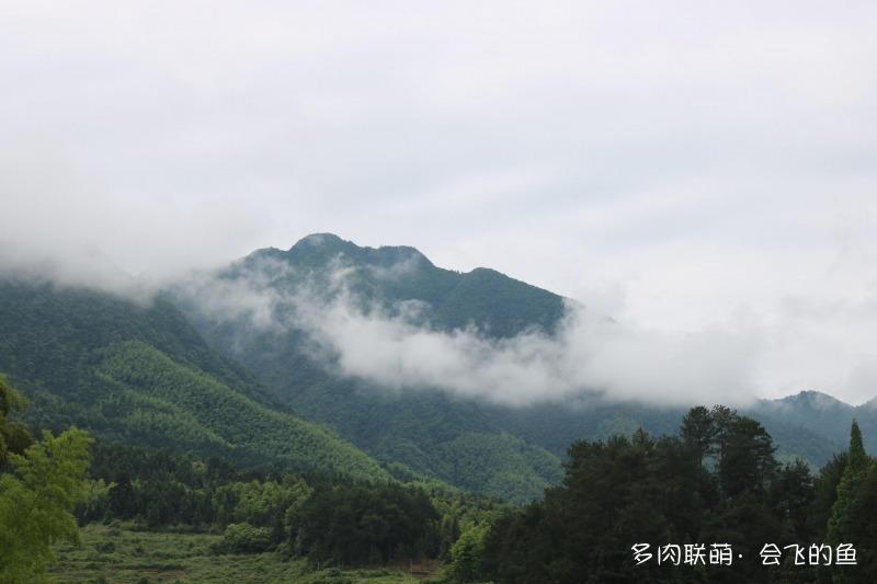 湖南邵阳农村里养的多肉