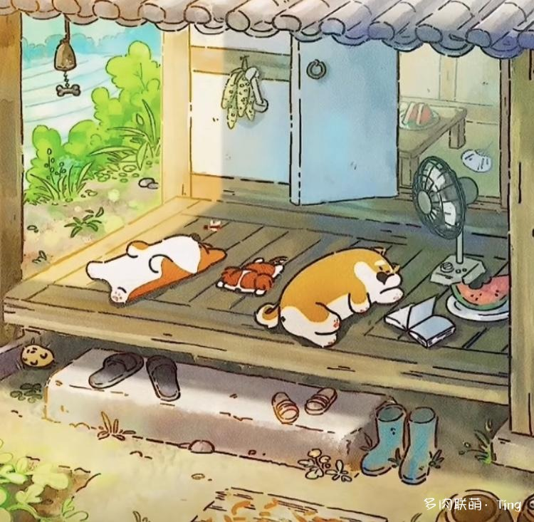 云南夏天的多肉
