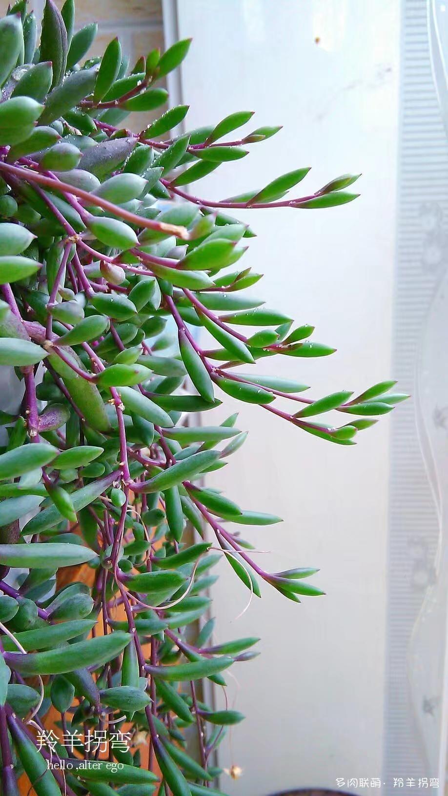 紫玄月的成长记录