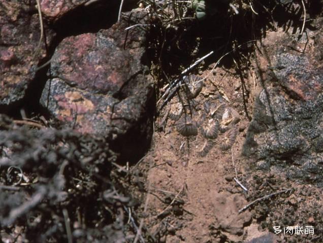 埋土里的瓦苇