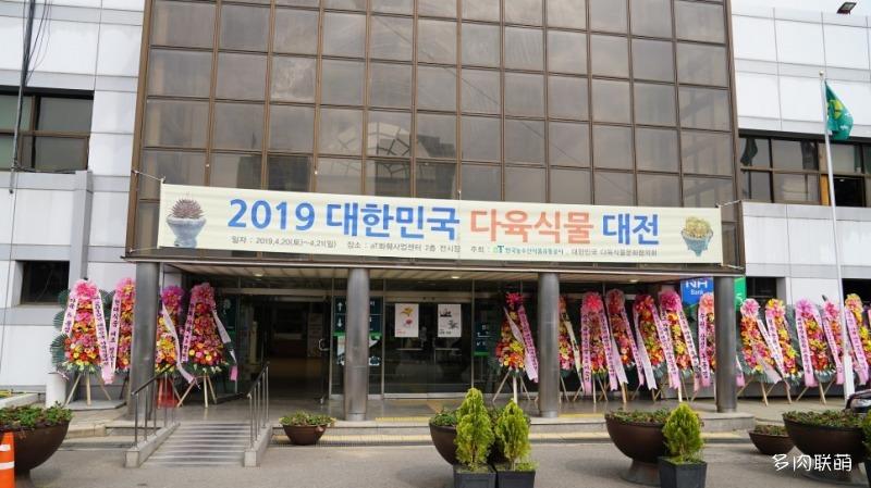 韩国多肉植物大展