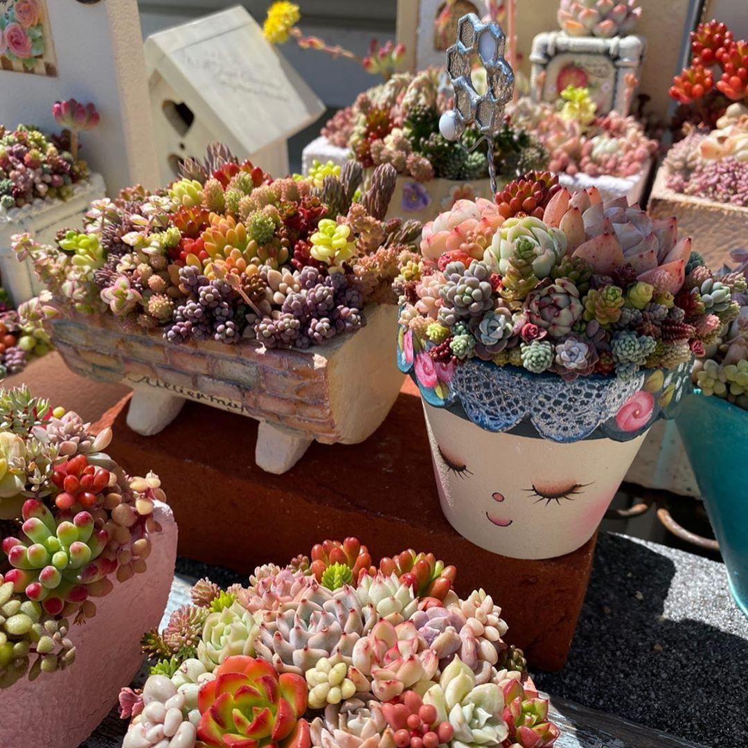 可爱的花盆可爱的多肉拼盘