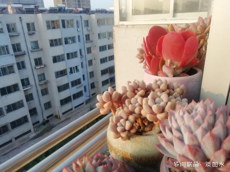 东北(辽宁)初冬的多肉