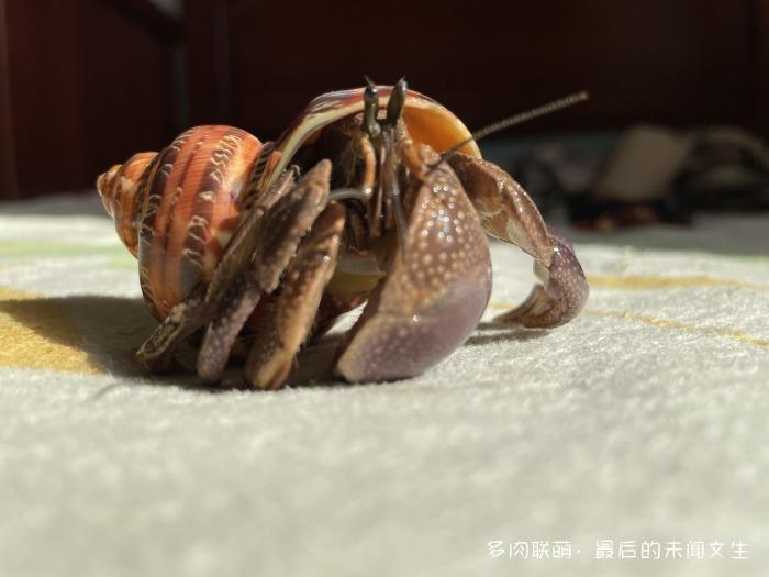 山西太原,秋天的多肉
