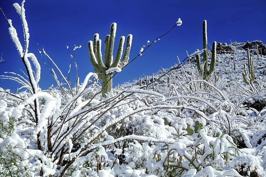 雪中仙人掌