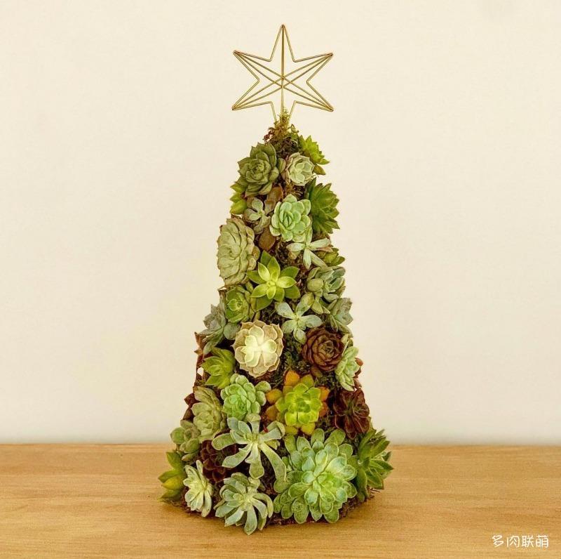 多肉圣诞树
