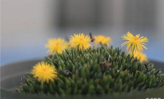 远看像草,近看更像草的照波