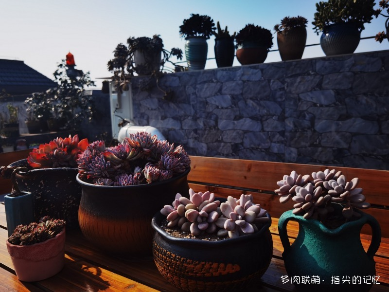 四川乐山,春天里的多肉