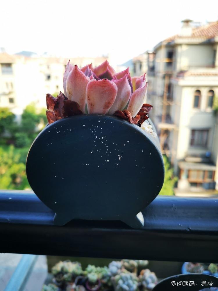 花盆手绘小妙招