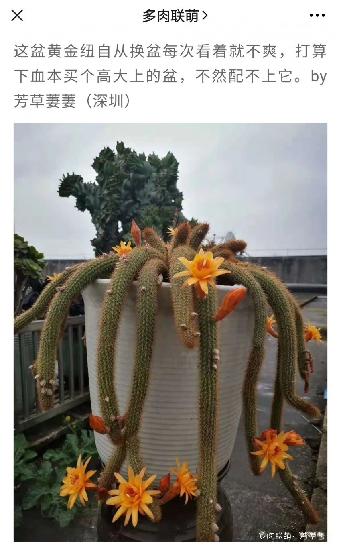 夏日开花的仙人球