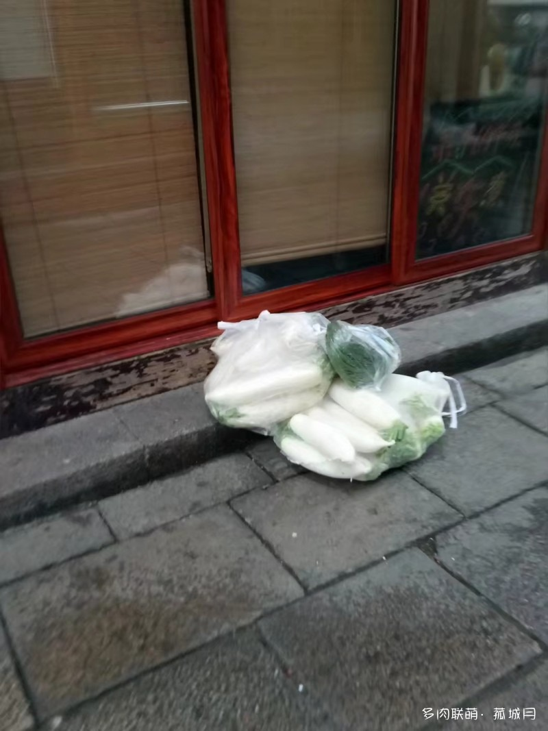 雨季,变绿了的多肉