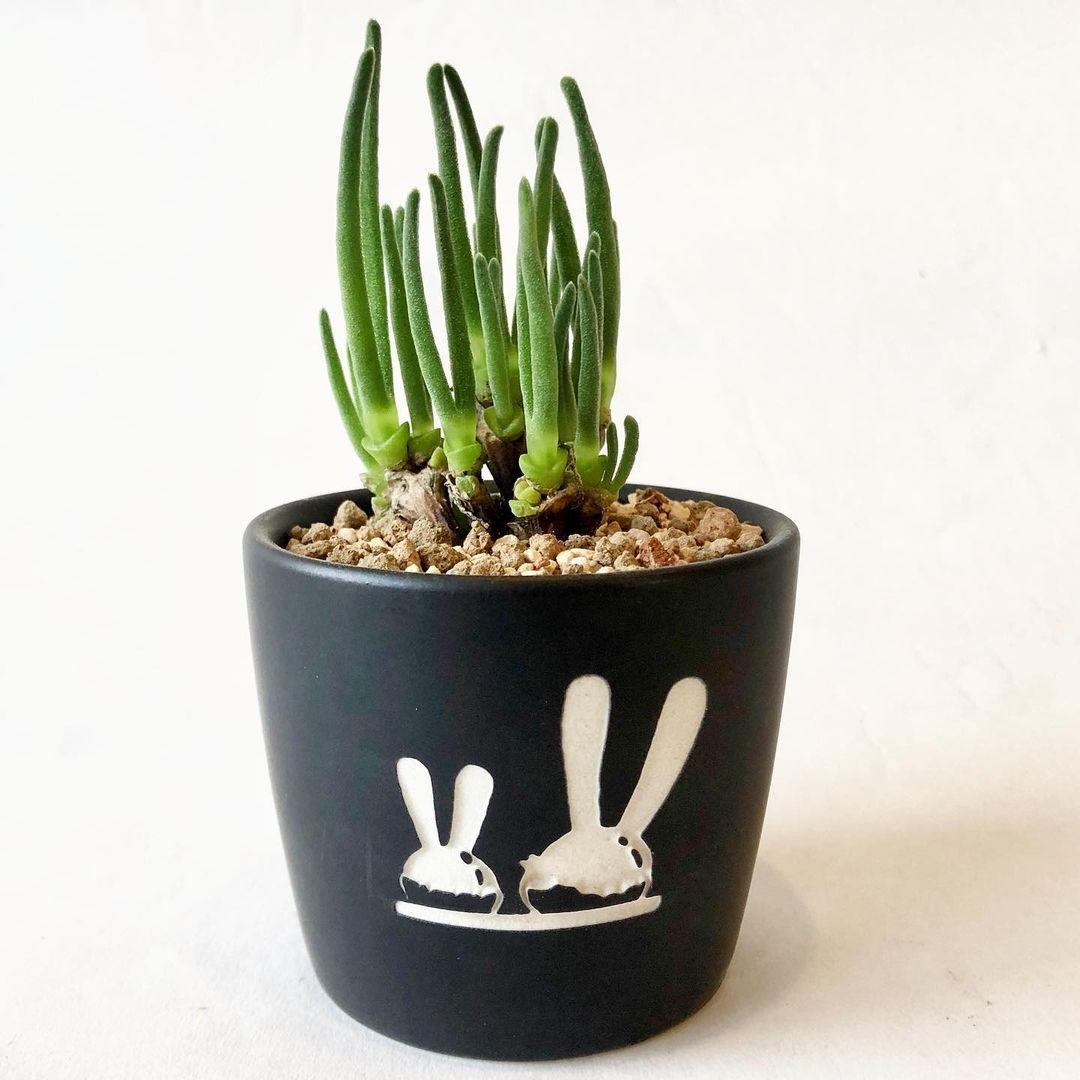 简单符号花盆
