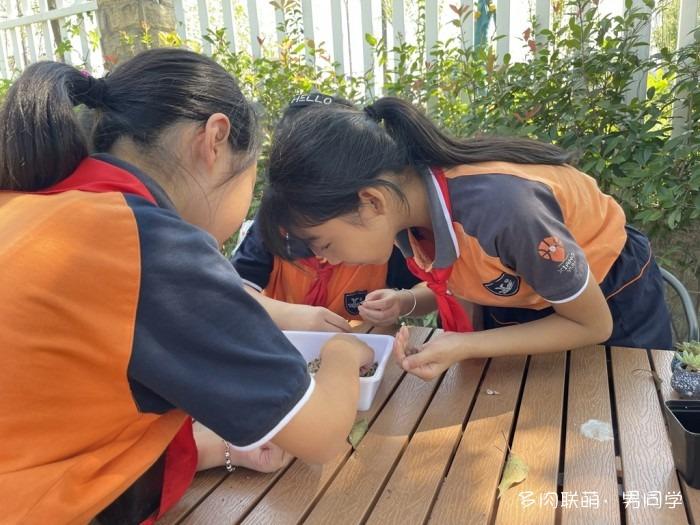 小学生的多肉生态园